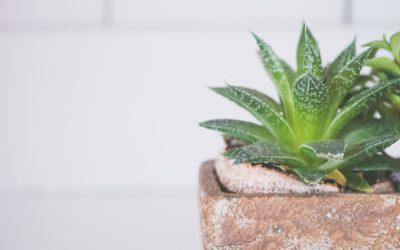 Proprietăţile și beneficiile plantei Aloe Vera asupra sănătăţii